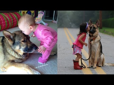 Funny and Cute German Shepherd Puppies Compilation #2 - Cutest GSD