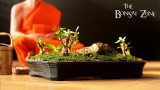 Designing and Making My Own Bonsai Pots with a 3D Printer, Dec 2017
