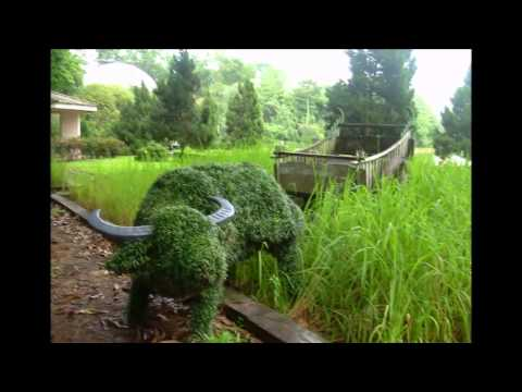 Visit to Singapore Zoo by Myanmar Intrepid Traveler