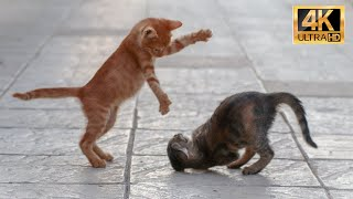 awesome cat, funny animals life,