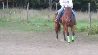 ProSix: Getting Your Horse to Track Underneath Himself