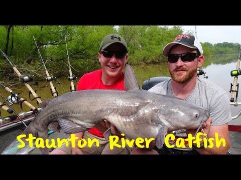 Buggs Island Spring Catfish Fishing (Kerr Lake)