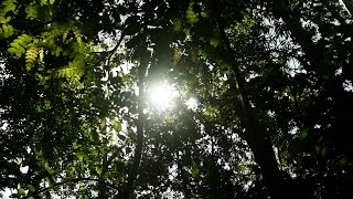 The Amazon Soya Moratorium - Forest Solutions