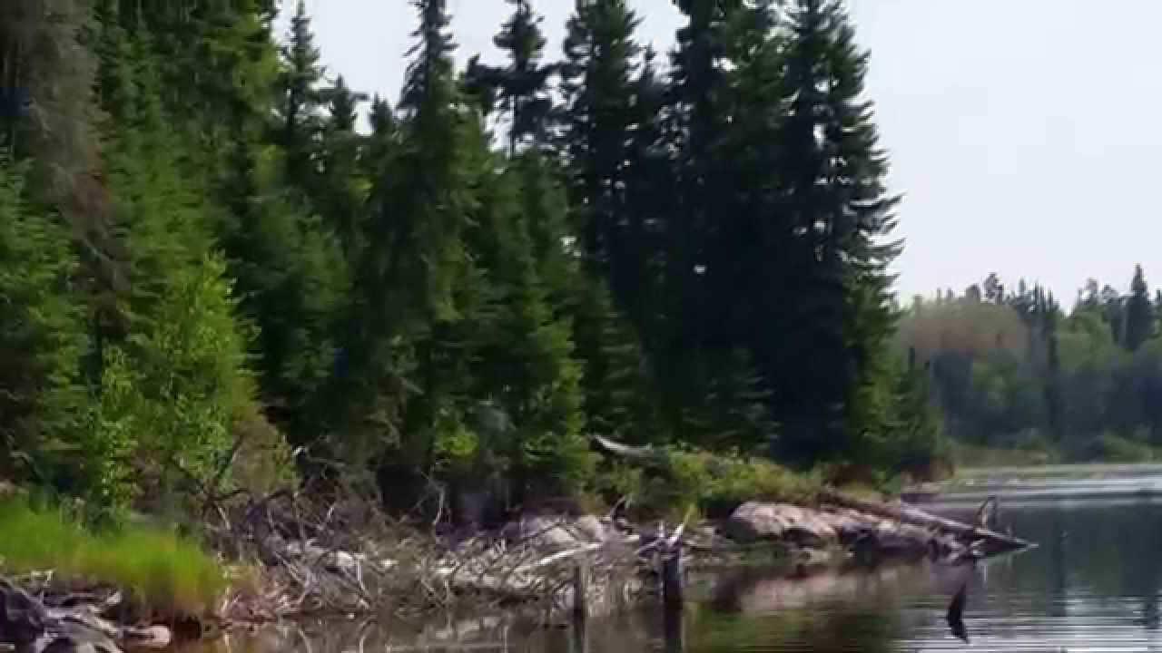 Bald eagle on lac seul youtube for Lac seul fishing report