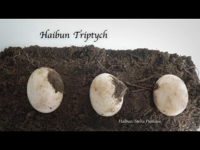HaibunTriptych