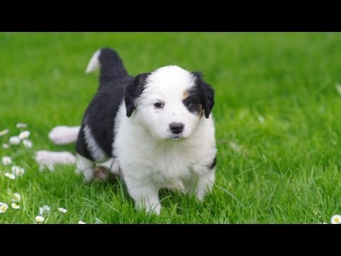 Teach Your Puppy to Come When Called | Puppy Care
