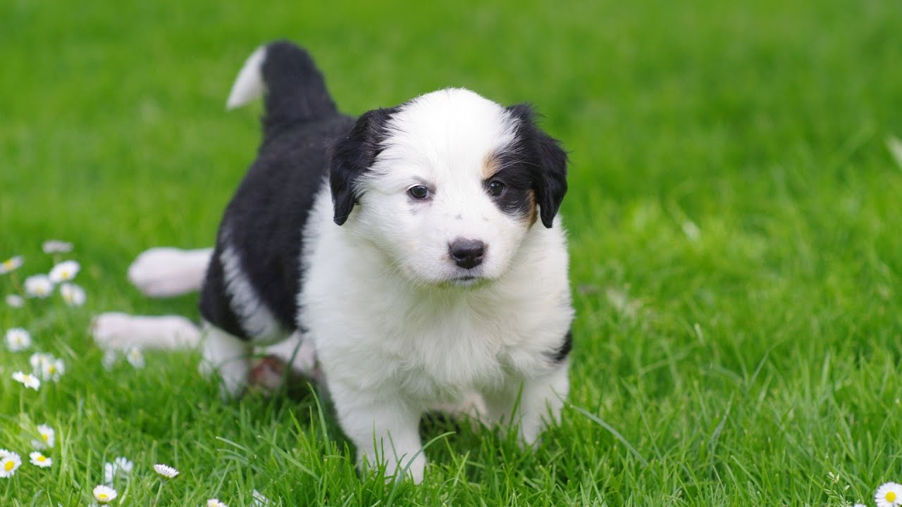 Teach Your Puppy To Come When Called Puppy Care Youtube