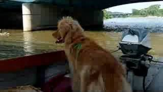 Golden Retriever On Boat
