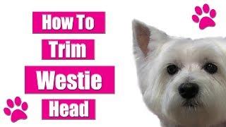 Grooming Westie Head