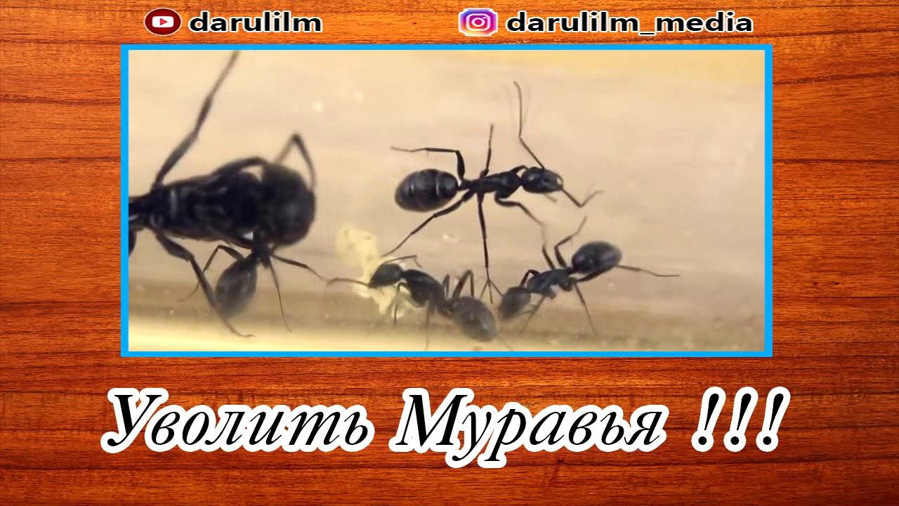 Уволить муравья !!!