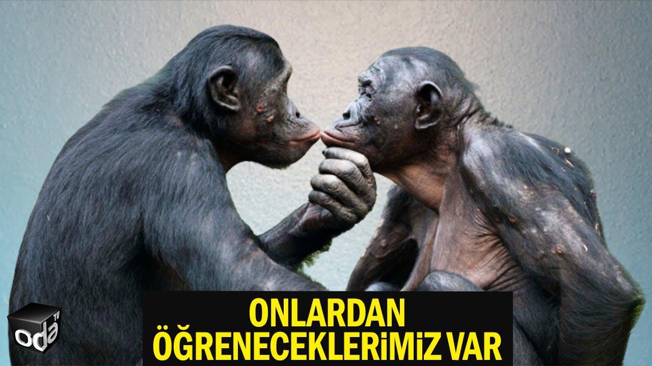 Hayvan Gibi Demeyin... Onlardan Öğreneceklerimiz Var... Aşk Gibi Mesela