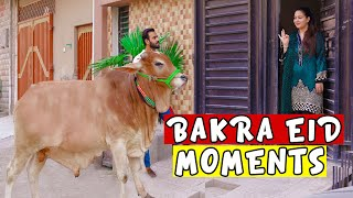 Bakra eid moments 2020 by Peshori vines