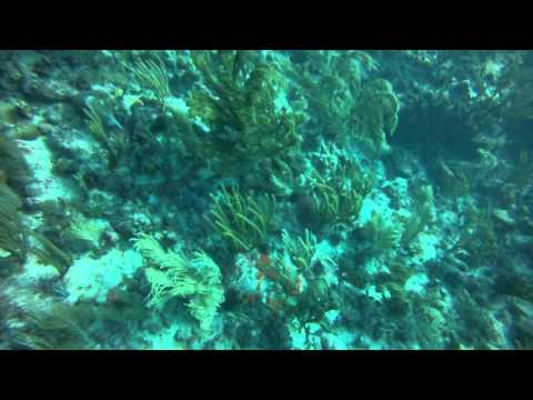 Diving Congo Cay USVI Part 1
