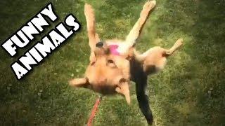 Funny Animals Compilation - Funny animals and fails Compilation