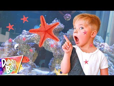 Our Starfish HAD BABIES!! ⭐️