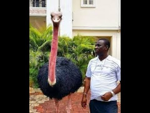ALH.WASIU AYINDE K1, IS THE RICHEST FUJI ARTIST IN NIGERIA,CHECK IT OUT