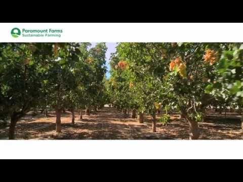 Paramount Farms Sustainable Farming