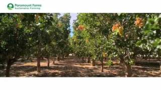 Paramount Farms Sustainable Farming
