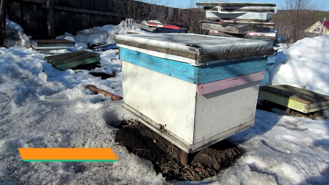 видео весенний облет пчел в теплице