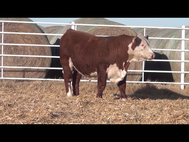 Express Ranches Lot 234