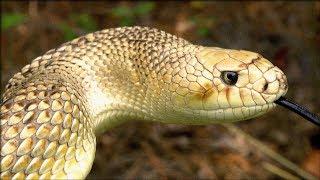 Snakes Alive!   Georgia Outdoors