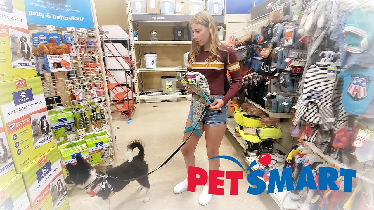 TAKING MY PUPPY SHOPPING FOR THE FIRST TIME!