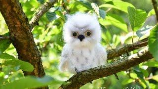 ПОЛЯРНАЯ  СОВА -- СУХОЕ  ВАЛЯНИЕ   /ШКОЛА  ФЕЛТИНГА Татьяны Шелиповой / How to Make Felt OWL/毡玩具