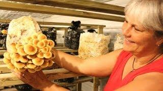 Growing Mushrooms at Windy Field Farms