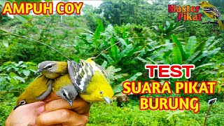 Gambar cover 🔴TEST SUARA PIKAT SEMUA JENIS BURUNG AMPUH MAS BRO