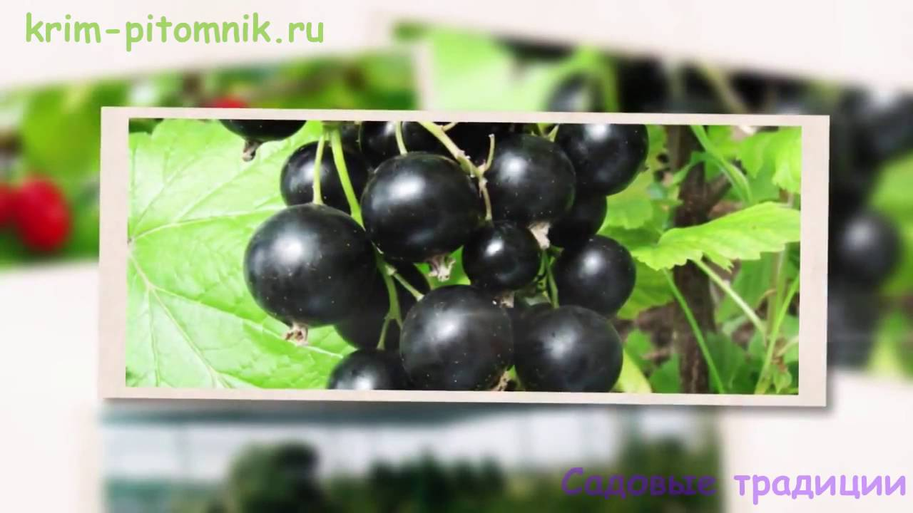 Саженцы Деревьев в Красноярске - YouTube