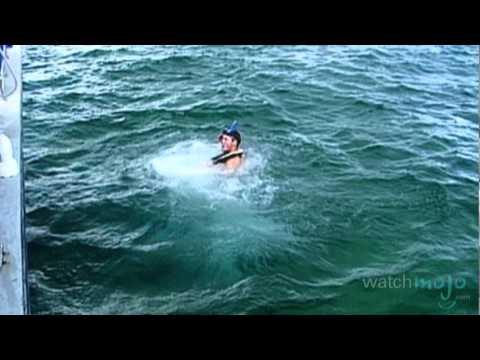 Travel Guide: Florida - Top Water Activities