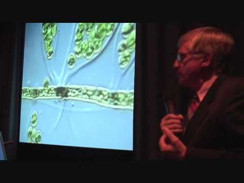 Brian J Ford on cell intelligence (2008)