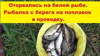 Оторвались на белой рыбе Рыбалка с берега на поплавок в проводку