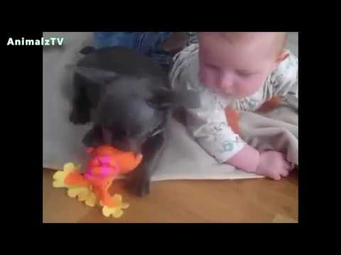 Dogs Bonding With Babies | Cute Puppies Compilation