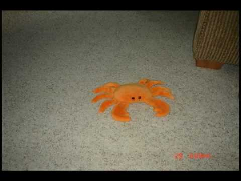 Digger the Crab Charges!