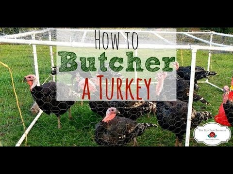 How To Butcher a Turkey (at home)