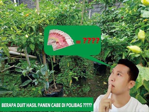 Menanam Cabe di Polybag( Pot)из YouTube · Длительность: 10 мин23 с