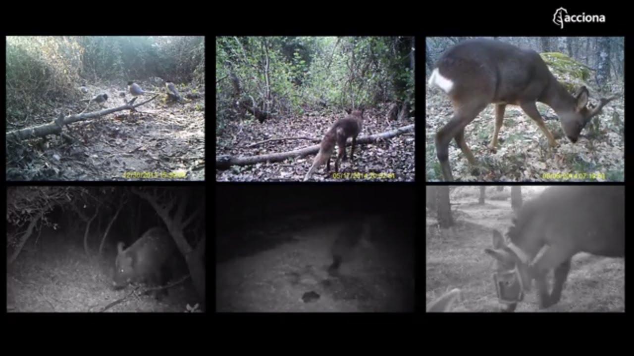 Wild fauna inhabiting the area around ACCIONA's facilities