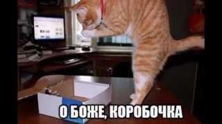почему кошки любят коробки? why do cats like box?