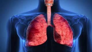 এই মুহূর্তে ফুসফুসকে শক্তিশালী ও স্বাস্থ্যকর রাখতে যা করবেন || Keep the lungs strong and healthy