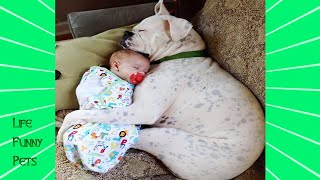 Cute Dogs and Babies are Best Friends  | LIFE FUNNY PETS