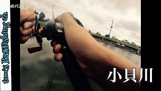 【茨城県 バス釣り】小貝川釣行