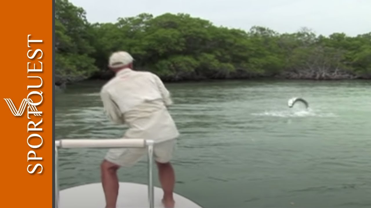 amazing tarpon fever fly fishing cuba full hd youtube