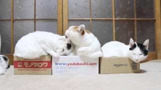 箱と猫 Box and cat 2015#11