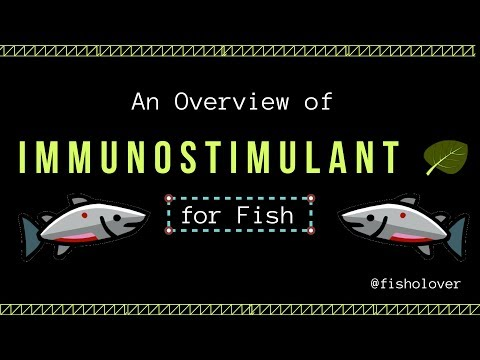 An Overview Of Immunostimulant For Fish