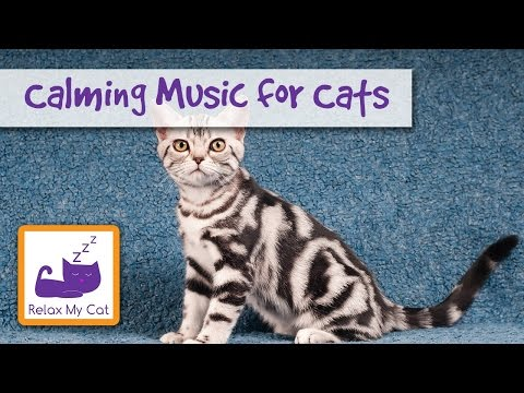 Calming Cat Music – For Cats Experiencing Anxiety and Fear