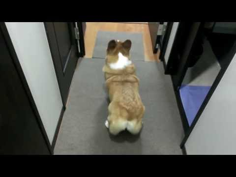 DOG SHAKES BUBBLE BUTT TWERK SONG