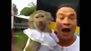 Приколы с обезьянами. Оружие в руках обезьяны. Злая горилла. Ржачь. Смешная нарезка. Горилла TV