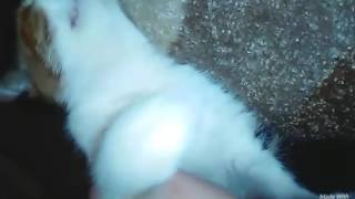 Видео с моей кошкой...