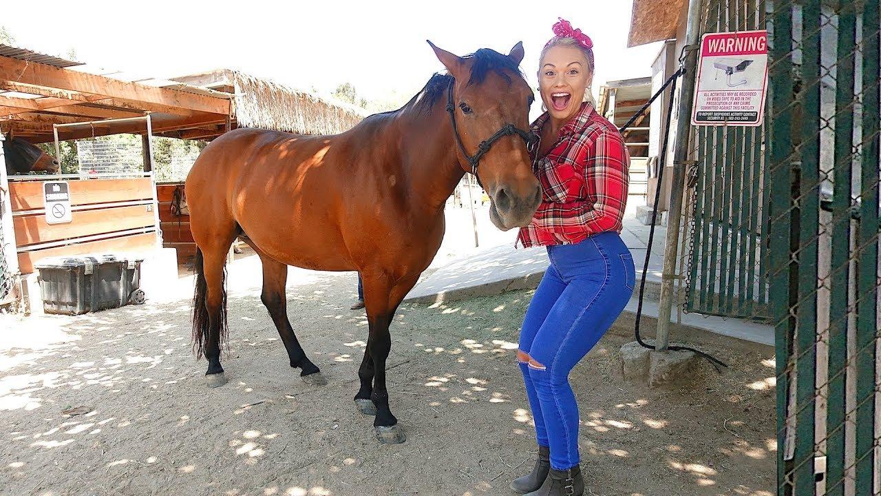 i-bought-my-girlfriend-a-horse-her-dream-pet